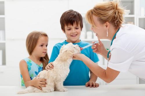 Vaccinations  Ellerslie, GA
